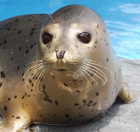 (公社)日本動物園水族館協会ってなにをするところ?