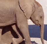 Species conservation / Nature conservation